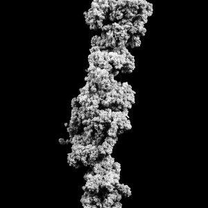 Jens Risch, silk thread quint